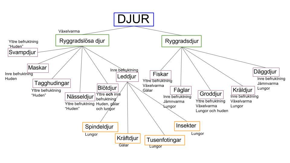 DJUR - lektion 1